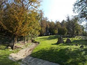 Uno scorcio dei sessanta ettari: magia del bosco a Clastra.
