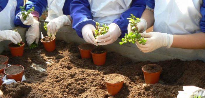 Le fattorie didattiche e sociali: un nuovo modo di vivere l'agricoltura